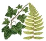Fern and Ivy Aromatherapy